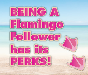 Being a Flamingo Follower has its perks!